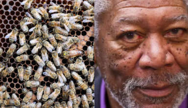 article abeille morgan freeman