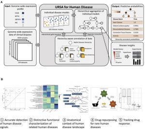 Schéma décrivant l'ensemble du processus de comparaison et d'identification étape par étape. Crédits : Young-suk Lee et al. 2019